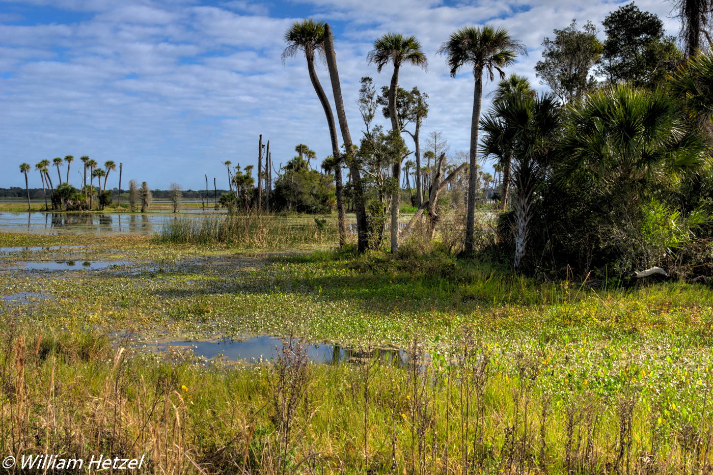 2016 February  Field Trip  Florida Wetlands